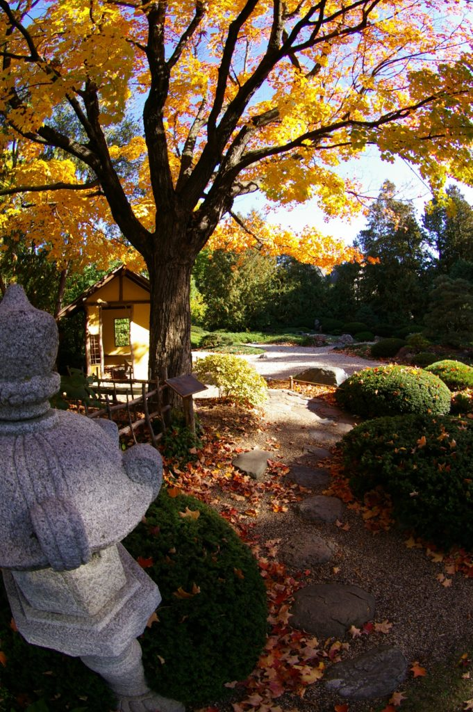 A leaf-covered path enters a serene Japanese garden