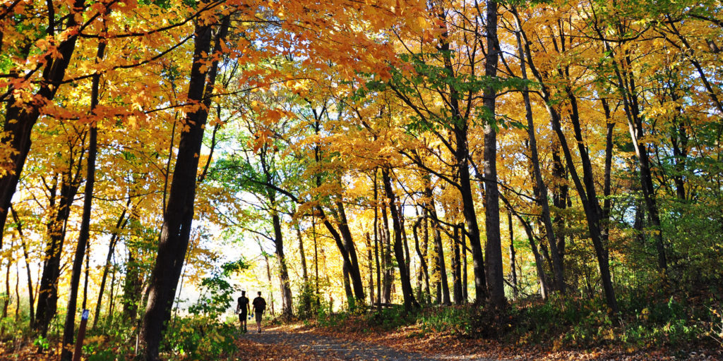 Silhouetted in the autumn sunset, two people walk along a path canopied by trees